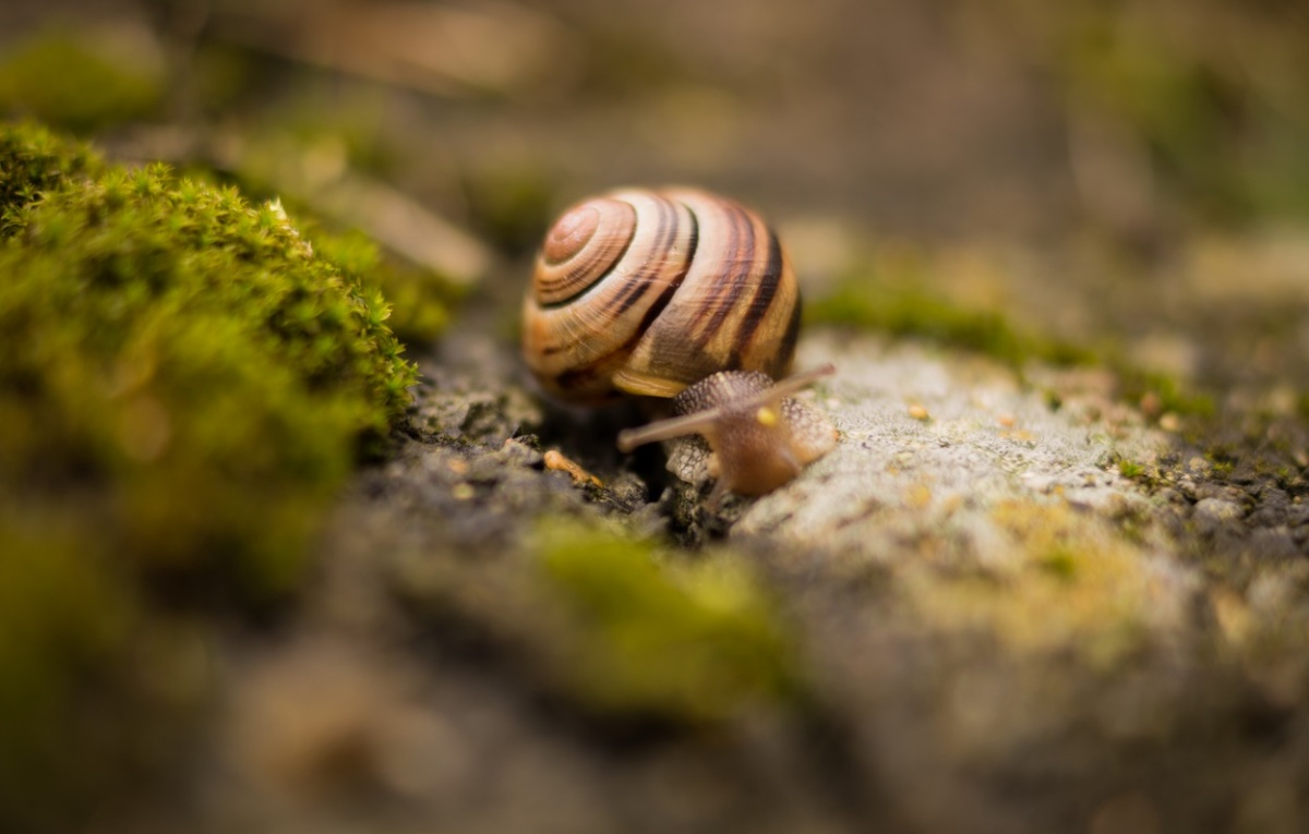 A Snail's-Eye View, Part2