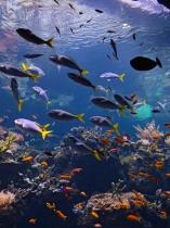 Coral reef aquarium, Academy of Sciences, SF