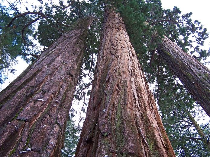 calaveras-big-trees-362009_3360820391_o