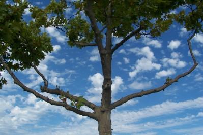 tree-and-sky_2198215092_o