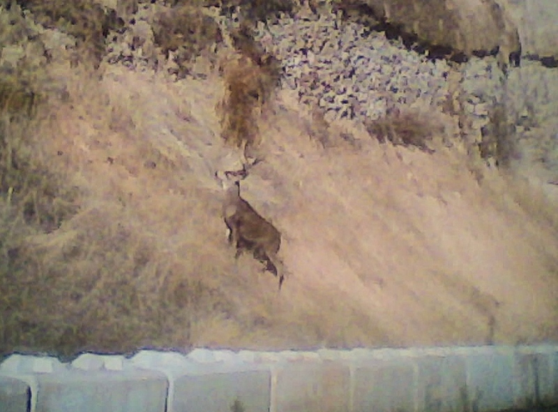 buck8_15549800328_o-crop