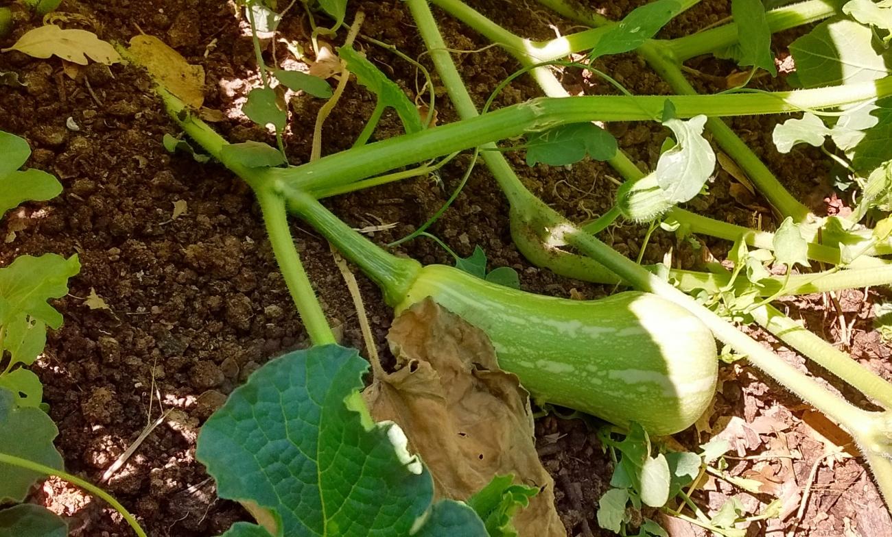 2016-06-21 09.43.33-crop