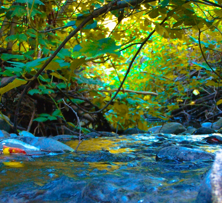 100_2384-crop-colors