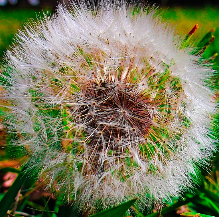 DSCF8222-crop-colors