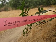Flag tied to a tree at Beals Point, Folsom Lake