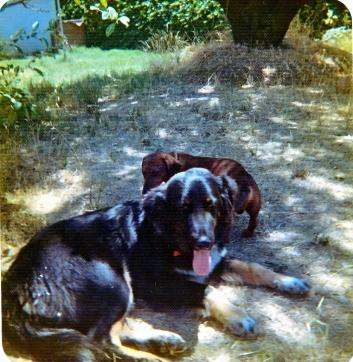 Big dog Sascha and little dog Mike